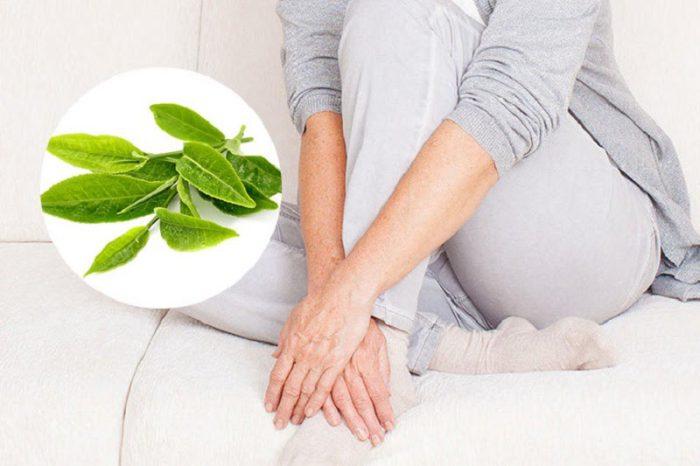 Lá trà xanh giúp chữa hôi vùng kín hiệu quả