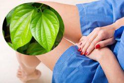 Dùng lá trầu không để cải thiện tình trạng ngứa ngáy